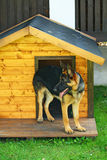 Dog in the hut Royalty Free Stock Photos