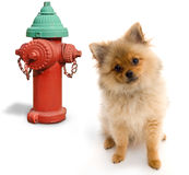 Dog and Hydrant stock image
