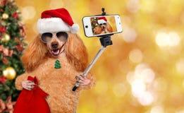 Dog i den röda julhatten som tar en selfie samman med en smartphone Arkivbild