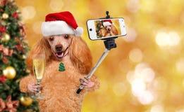 Dog i den röda julhatten som tar en selfie samman med en smartphone Arkivfoton