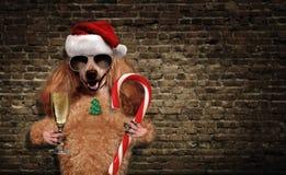 Dog i röd julhatt med champagne och håll en julgodis Royaltyfria Foton