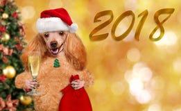 Dog i röd julhatt med gåvan och champagne Arkivbild
