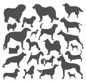 Dog icon set. Heatlh care, vet, nutrition, exhibition Stock Photo