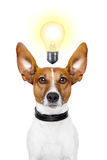 Dog idea royalty free stock photos