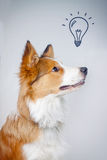 Dog and an idea Royalty Free Stock Images