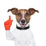 Dog idea. Smart and clever dog having an idea Stock Photo