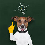 Dog idea Royalty Free Stock Photography