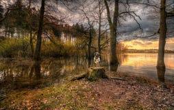 Dog on an idyllic lake royalty free stock photography