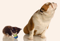 Dog ignoring playful kitten Royalty Free Stock Images