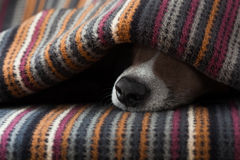 Dog ill or sleeping Royalty Free Stock Photography