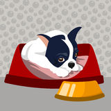 Dog illustration Stock Photos