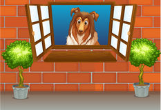Dog. Illustration of a dog by the window stock illustration