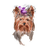 Dog illustration. Yorkie. . watercolor Stock Image