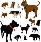 Dog illustrations. Colour vector illustrations and black silhouettes of dog with red pet collar Stock Image