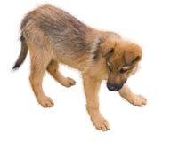 A dog Stock Image
