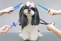 Free Dog In A Grooming Salon Stock Images - 215089214
