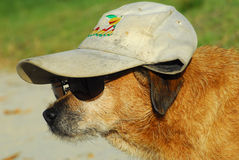 Dog In Disguise Royalty Free Stock Photo