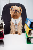 Dog In Glasses Stock Images