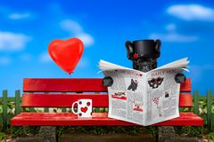 Free Dog In Love Sitting On A Bench Stock Photography - 108724332
