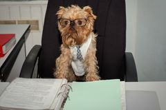 Dog - In Office Royalty Free Stock Image