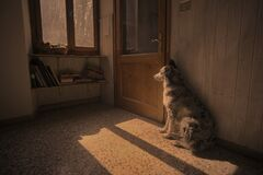 Free Dog In The Room Waiting To Go Out Looks Out The Window Royalty Free Stock Images - 177381799