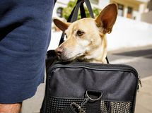 Free Dog In Transport Box Or Bag Ready To Travel Royalty Free Stock Photography - 104707357