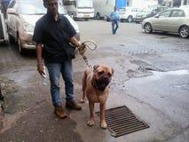 Dog. Indian house dog Royalty Free Stock Image