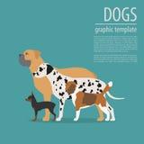 Dog info graphic template. Heatlh care, vet, nutrition, exhibiti Stock Photography