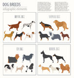 Dog info graphic template. Heatlh care, vet, nutrition, exhibiti Royalty Free Stock Image
