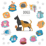 Dog info graphic template. Heatlh care, vet, nutrition, exhibiti Stock Images