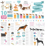 Dog info graphic template. Heatlh care, vet, nutrition, exhibiti Royalty Free Stock Photos