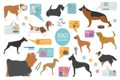 Dog info graphic template. Heatlh care, vet, nutrition, exhibiti Royalty Free Stock Photos