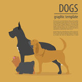 Dog info graphic template. Heatlh care, vet, nutrition, exhibiti Stock Photos