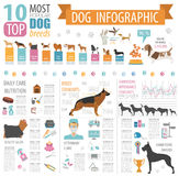Dog info graphic template.  Stock Photos