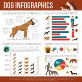 Dog infographics set. With breeds symbols and charts vector illustration Stock Photography