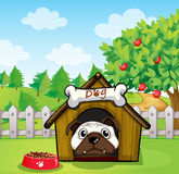 A dog inside a dog house Royalty Free Stock Photography