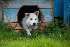 Dog inside doghouse Stock Photos