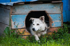 Dog inside doghouse Stock Images