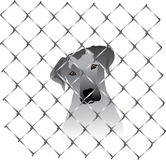 Dog inside a fence or cage Royalty Free Stock Photos