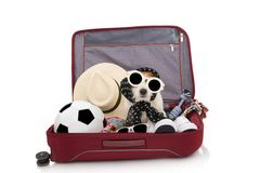 DOG INSIDE A RED MODERN BAGGAGE OR SUITCASE GOING ON SUMMER VACATIONS WEARING SUNGLASSES. ISOLATED AGAINST WHITE BACKGROUND royalty free stock photography