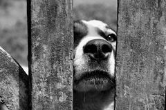 Dog. When the dog is interested in what is happening around Royalty Free Stock Photography