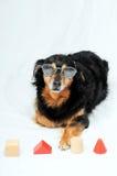 Dog IQ Test Royalty Free Stock Images