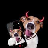 Dog isolated on black Royalty Free Stock Photo