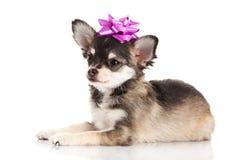 Dog isolated on white background Stock Photo