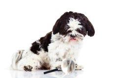 Dog isolated on white background lupe Stock Photo