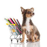 Dog isolated on white background school supplies Royalty Free Stock Photos