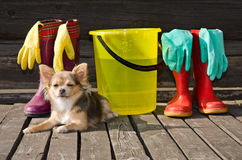 Dog with items for cleaning and rubber boots. Small dog lying at sunny veranda near items for cleaning and rubber boots royalty free stock images