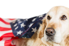 Dog with its American flag Royalty Free Stock Photography