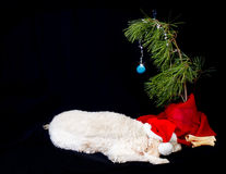 Dog and its Christmas Tree Royalty Free Stock Photos