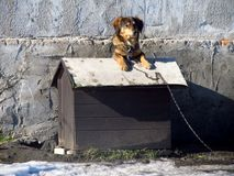Dog in its kennel Stock Images